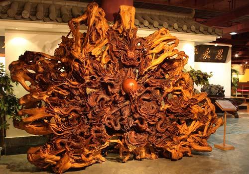 用一整颗红豆杉树根雕刻的九龙戏珠巨型根雕,红豆杉是我国的珍贵树木