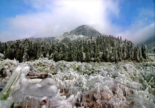 森林植物和野生动物资源极为丰富,是一座巨大的生物宝库和天然氧吧,已