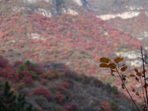 红岩岭自然风景区位于山西省平定县东北部的岔口